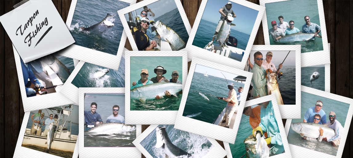 tarpon-collage